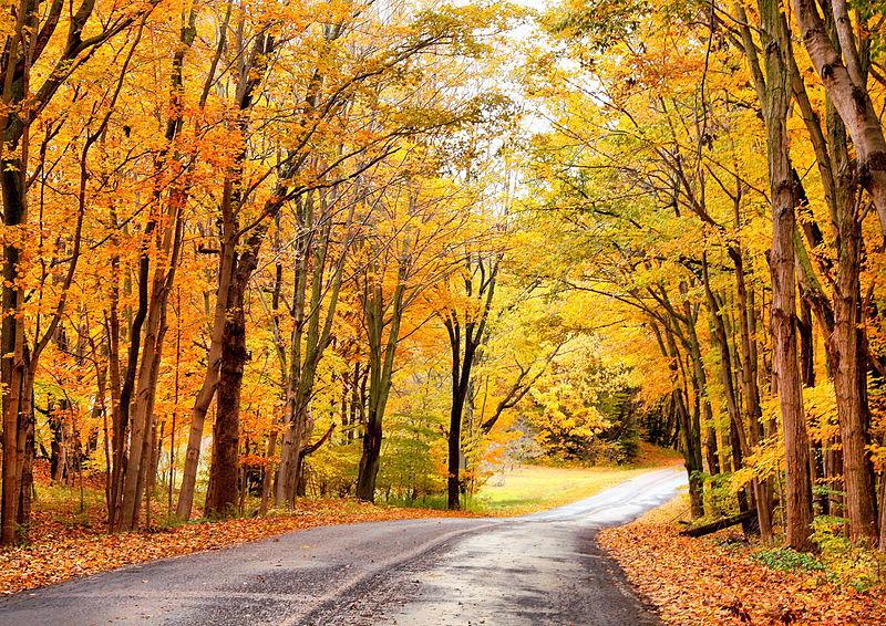 Fall fashion: the Autumn accessory guide